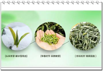 针形茶类的机械加工工艺|茶叶加工