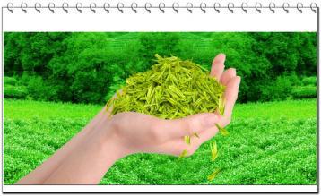 创新茶叶加工 提高附加值|茶叶加工技术