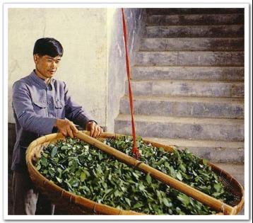 尤溪县茶叶加工业发展现状及对策|茶叶论文