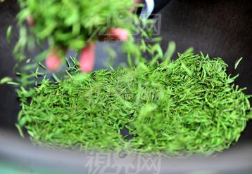 手工炒制高级绿茶工艺|茶叶炒制工艺