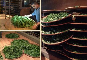 乌龙茶烘焙技术全解|茶叶烘焙