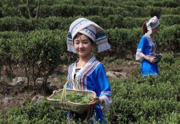茶叶杀青是什么|茶叶杀青的概念