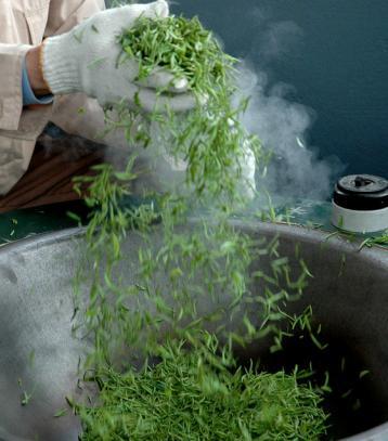 杀青温度决定机制扁形茶品质|绿茶杀青技术