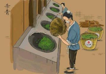 茶叶发酵的原理|茶叶生化