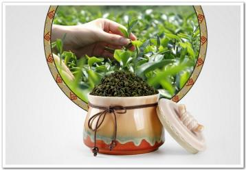乌龙茶的发酵要点|铁观音发酵工艺