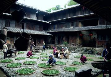 安溪建设茶企信用体系|铁观音资讯