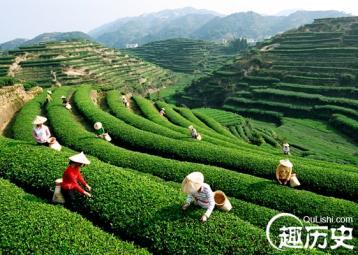 中国安溪茶叶史话 铁观音起源
