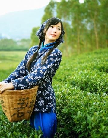 铁观音茶文化诗词 关于铁观音茶的诗词