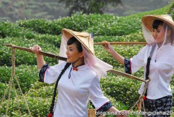 《武夷山茶歌》|民间茶歌