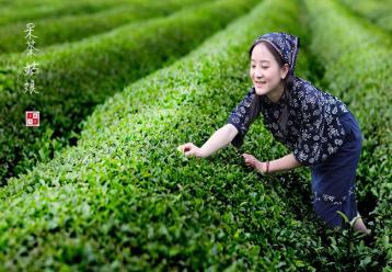 茶歌:研究茶史的活化石