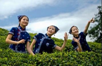 《台湾茶歌》|茶歌民谣