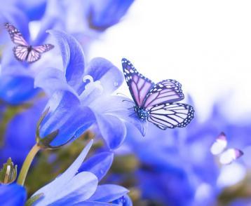 Butterflies And Flower 花与蝴蝶|绿色音乐