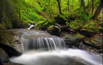 古雨林|大自然冥想音乐