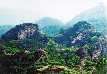 武夷山大红袍|福建茶叶品种