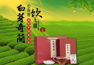 福建名茶:白芽奇兰