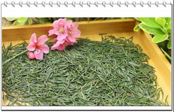 江苏名茶:金山翠芽