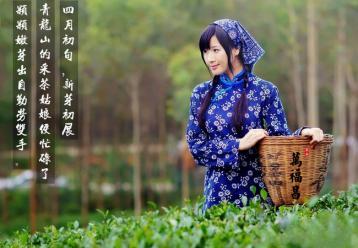 南京雨花茶|江苏十大名茶