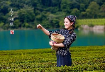 广西名茶:南山白毛茶