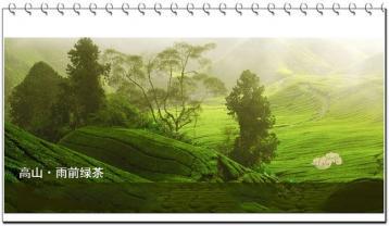 广西名茶:贺县开山白毛茶