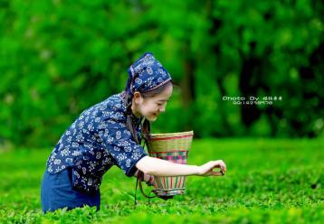 将军峰云绿茶|广西名茶