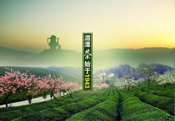 贵州名茶:湄潭翠芽|湄江翠片