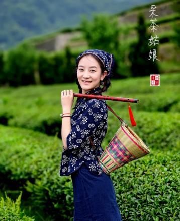 南江大叶茶|四川名茶