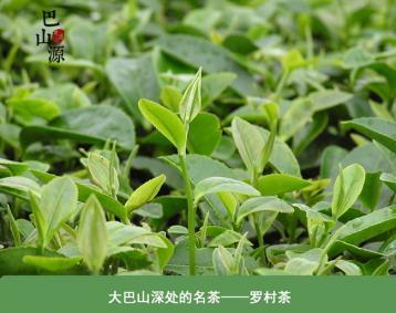 罗村茶|四川名茶