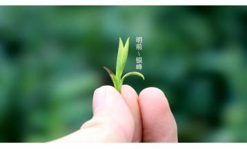 新县香山翠峰·绿茶|河南名茶