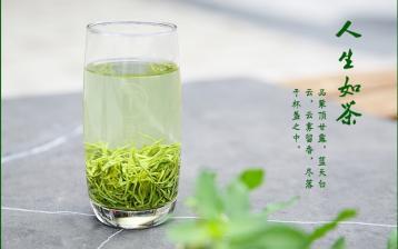 河南名茶:雷沼喷云·绿茶
