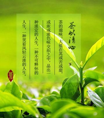 大悟寿眉茶|湖北名茶