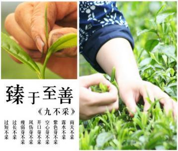 石门银峰茶|湖南名茶