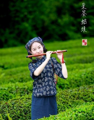 三峡龙井|台湾十大名茶