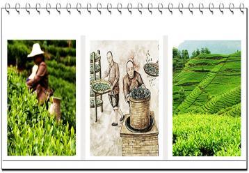 祁门红茶制作工艺|祁门红茶工艺