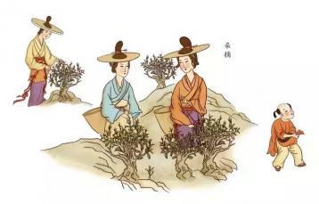 祁门红茶初制和精制完整制作工艺流程