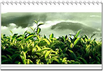 坦洋工夫红茶市场及营销|红茶文化