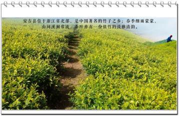 新品红茶香飘高家堂|安吉红茶