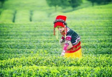 浅谈中国茶文化 茶叶论文