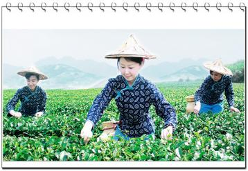 中国茶文化的特性|茶论文
