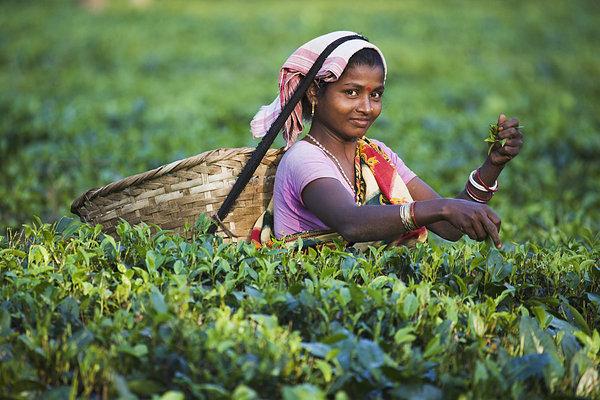 印度茶文化