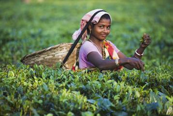 印度茶文化|外国茶文化