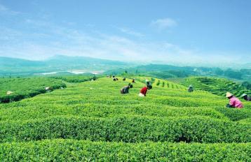茶与诗词|中国茶文化