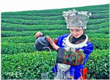 饮茶方法的演变|茶文化