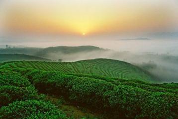 茶文化的社会功能|茶文化知识