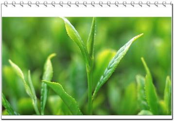 茶叶保存温湿度|茶叶储存知识