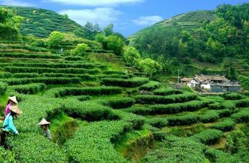 福建省安溪县茶叶机械发展现状及发展前景