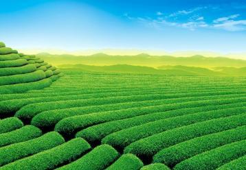 高档扁型类茶叶机械加工|绿茶茶叶机械加工