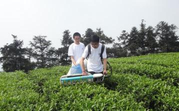 陇川茶叶机械采摘初探|采茶机