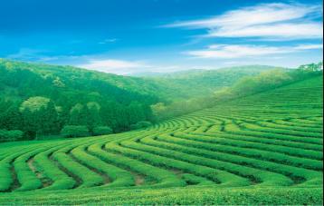 茶叶机械知识问答