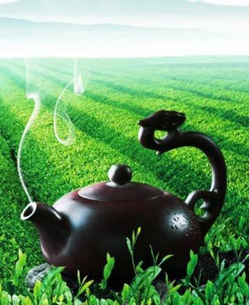 清香型和浓香型铁观音茶的不同之处