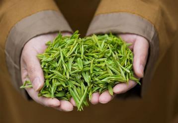 黄茶有哪些种类?|黄茶品质特征如何?